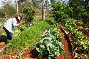 Empezaron a producir alimentos donde estaban los pinos en Puerto Piray