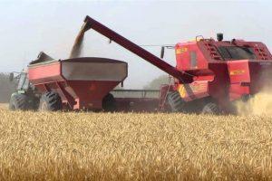 La retención a la soja subirá hasta el 33% y no habrá variaciones para trigo y maíz
