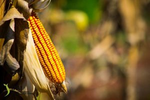 """El impulso a los monocultivos """"implicará un camino concentrador de tierra y menos productores"""""""