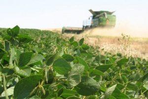 Por el avance de la soja, El Chaco supera a Misiones como principal exportador del NEA