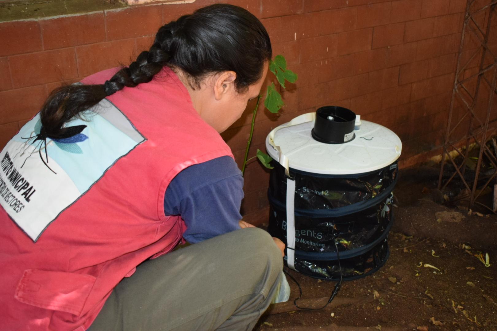 Dengue: El municipio capitalino instaló trampas para atrapar mosquitos adultos y determinar si están infectados