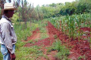 El debate por el maíz transgénico: ambientalistas advierten que el proyecto limitará el acceso y manejo de las semillas