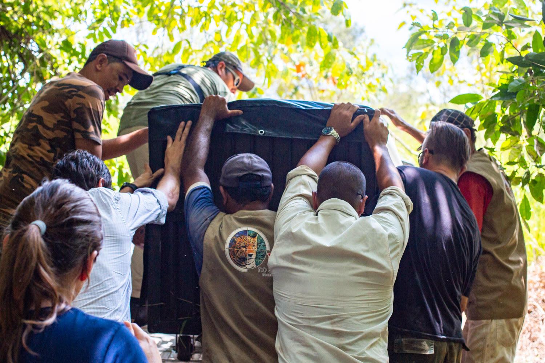 SENASA controló el ingreso de las dos yaguaretés que serán parte del proyecto de recría del Iberá