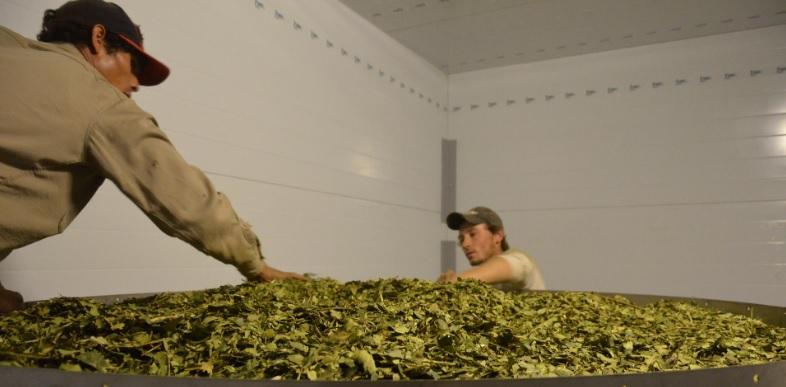 El mate no para: durante el primer bimestre los argentinos consumieron 40,74 millones de kilos de yerba