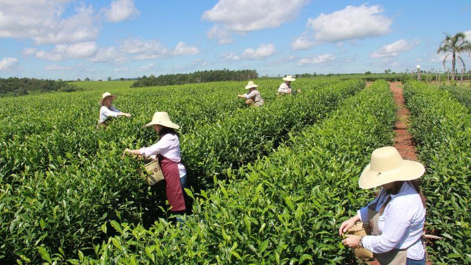 La tealera Don Basilio se sumó a las empresas que valorizan económicamente el agua en Misiones