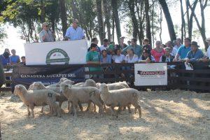 En el campo La Armonía se realizó el segundo remate de ganado menor