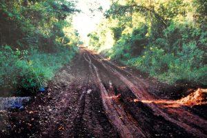 """Alerta ambiental: Bolsonaro quiere reabrir la """"estrada del Colono"""" en el parque nacional Iguaçú"""