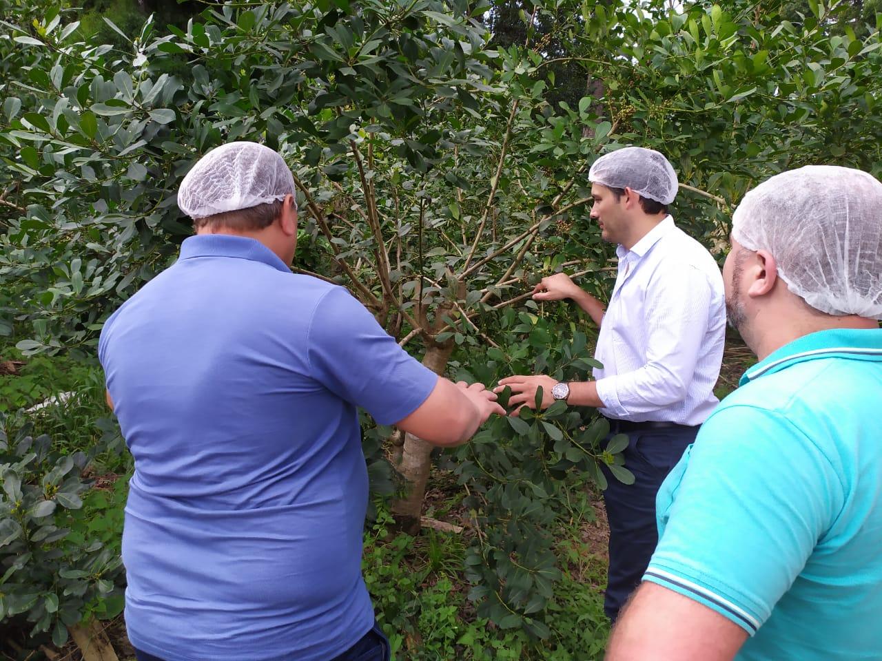 Petterson se reunió con autoridades del Centro Yerbatero de Brasil