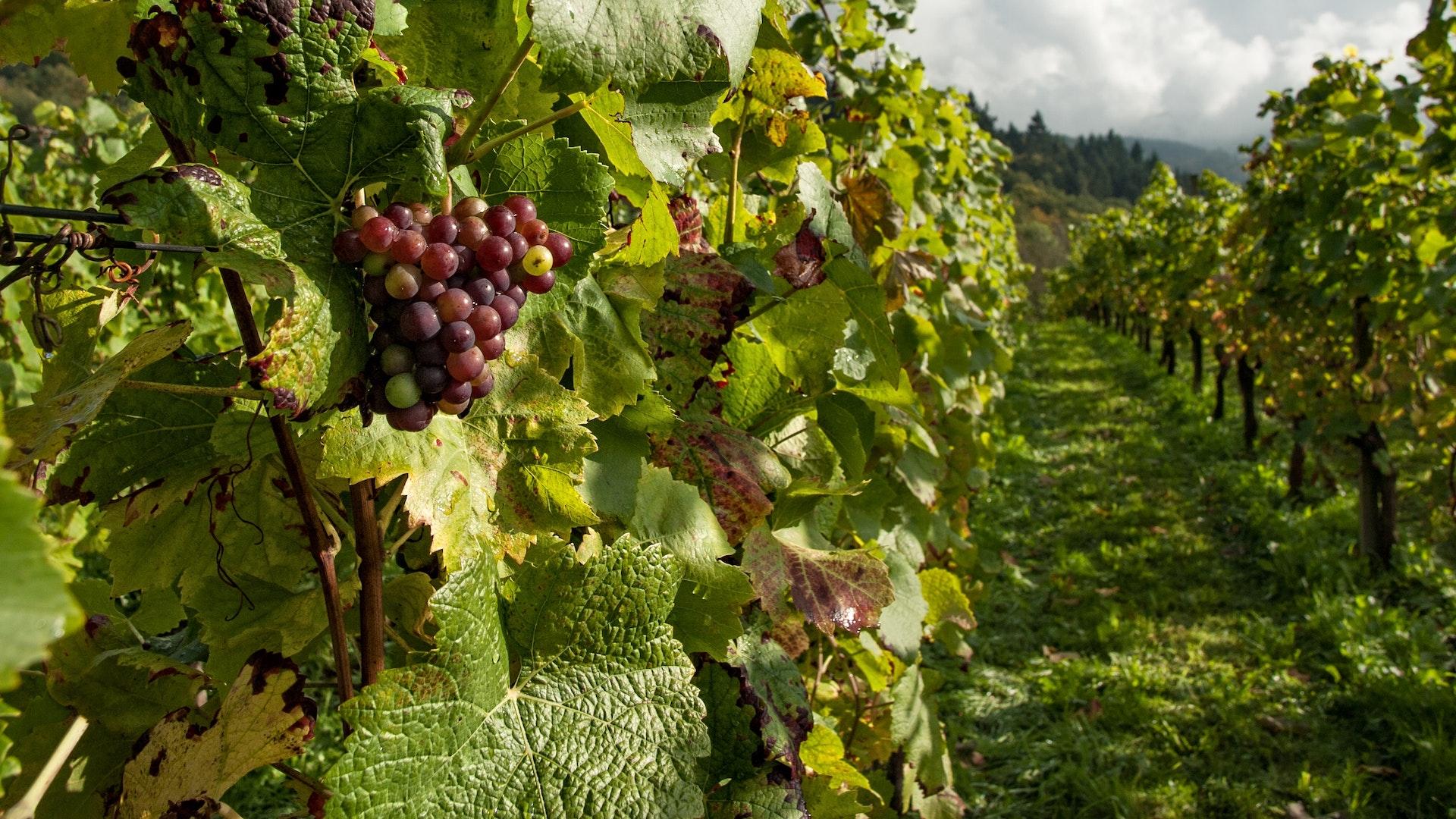 El Gobierno nacional apoyará junto a la provincia de Mendoza al sector vitivinícola con préstamos a una tasa bonificada del 20%