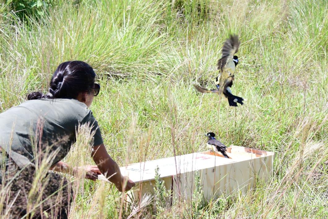 Trece aves fueron liberadas en la Reserva Natural Urutaú