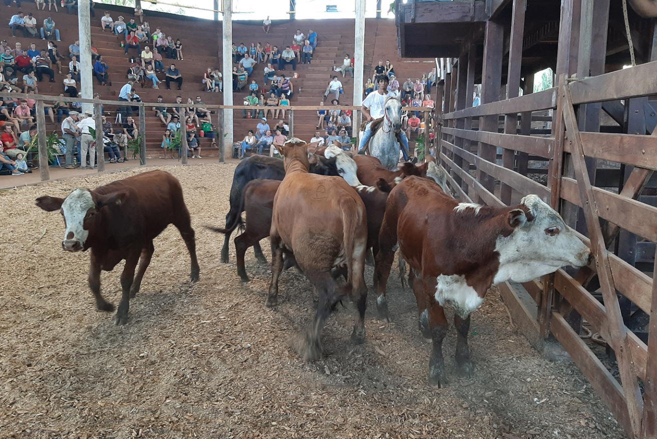 """Oriozabala sobre la Fiesta del Ternero: """"Fue histórica la cantidad de cabezas de ganado, la mayor de los últimos diez años"""""""