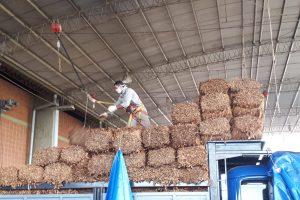Tabaco: productores venden 55.000 kilos en el primer dìa de acopio