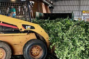 ¿Qué hacemos con la yerba? El nuevo debate en el auge del oro verde