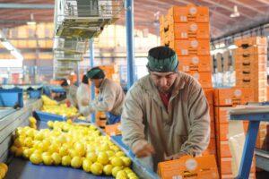 Según CAME, bajó la brecha entre el precio en góndola y lo que recibe el productor por productos agrícolas