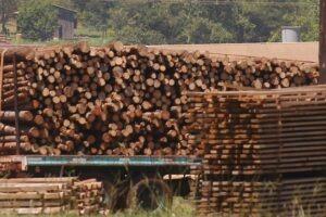 Con el Renovar instalarán una planta de energía con biomasa en Santo Tomé