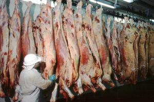 La faena de bovinos se mantuvo firme durante el primer mes del 2017