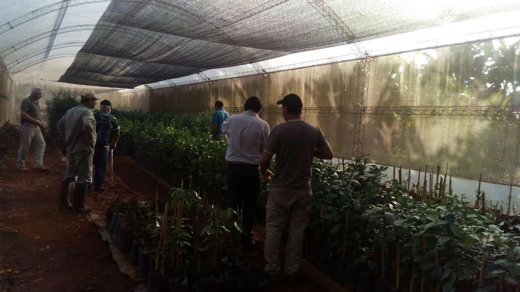 Evaluaron el crecimiento de las plantas de citrus en viveros de la zona de Montecarlo