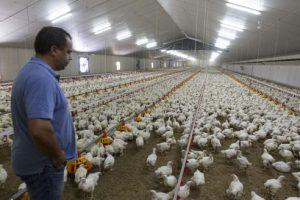 Del campo a la góndola: los precios de los alimentos se multiplicaron 5,29 veces en marzo
