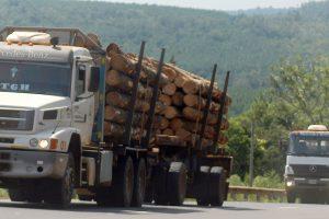 ¿La energía por biomasa puede crear diez mil empleos en Misiones?
