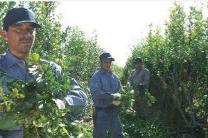Precio de la yerba: la grilla juega en contra de las pretensiones de los productores y alivia a la industria