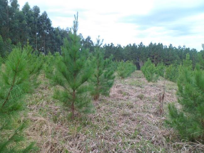 Alerta Verde: las aseguradoras no quieren seguir financiando los planes forestales