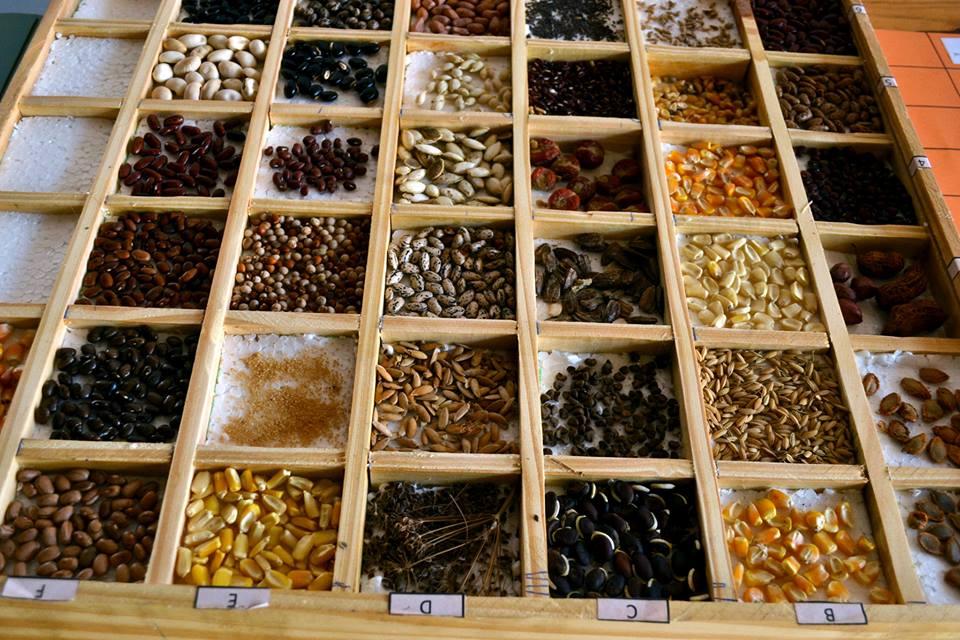 Feria e intercambio de semillas del Alto Uruguay