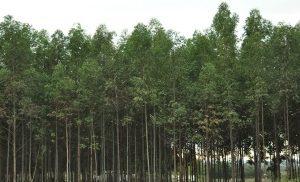 El crecimiento invisible en el sector foresto-industrial