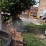 Los niños son tan buenos para enseñar sobre dengue a los padres como un experto, reveló un estudio en Misiones