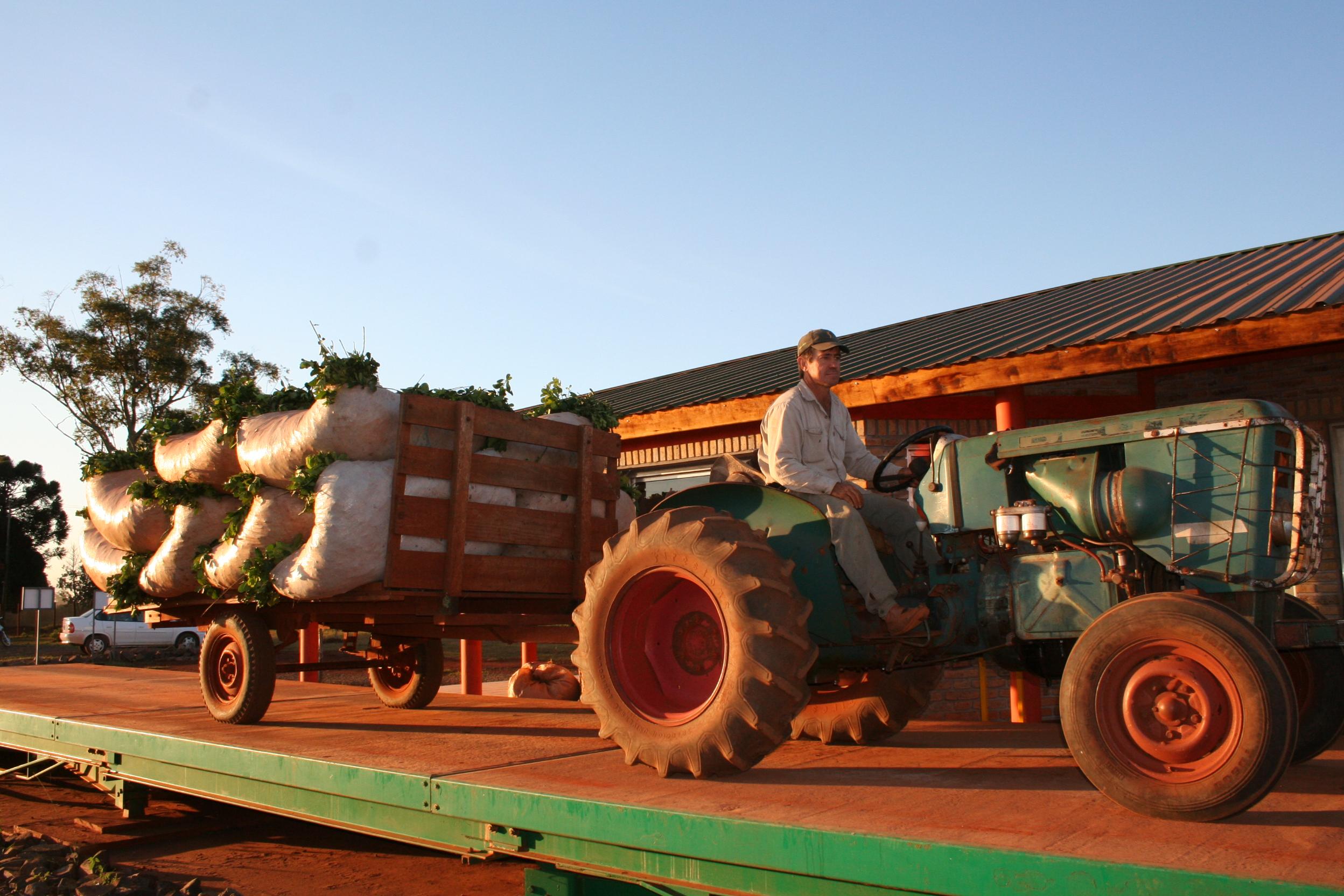 Yerba mate: sostenida recuperación en el ingreso de hoja verde a secaderos