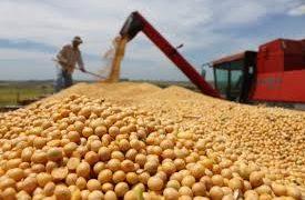 La empresa estatal china Sinograin aumentará un 25% las compras de porotos de soja argentinos