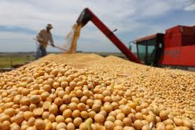 Rusia podría prohibir temporalmente la importación de soja brasileña por su alto contenido de glifosato