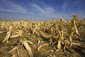 Estiman que se perderán casi US$5.000 millones por la sequía en la región central del país