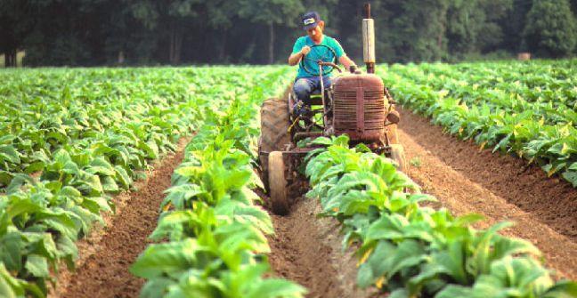 Tabaco: caída del consumo, inflación y dólar, ejes del enojo de productores