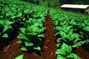 Precio del Tabaco: no se llegó a un acuerdo pero están más cerca