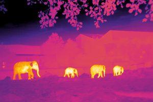 Tecnología espacial para ayudar a las especies en peligro de extinción