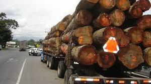 Intervienen la Dirección de Control Forestal y separan de sus funciones a agentes forestales