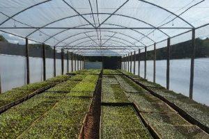 Forestales Hut incluye en sus servicios la instalación de invernáculos