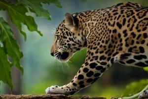 La Selva Misionera se ofrece como Maravilla Natural Argentina