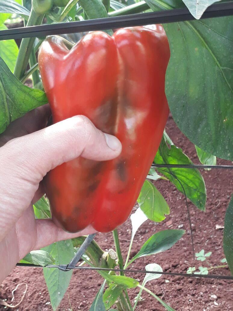 El Agro asiste con acompañamiento técnico a productores del Plan Soberanía Hortícola