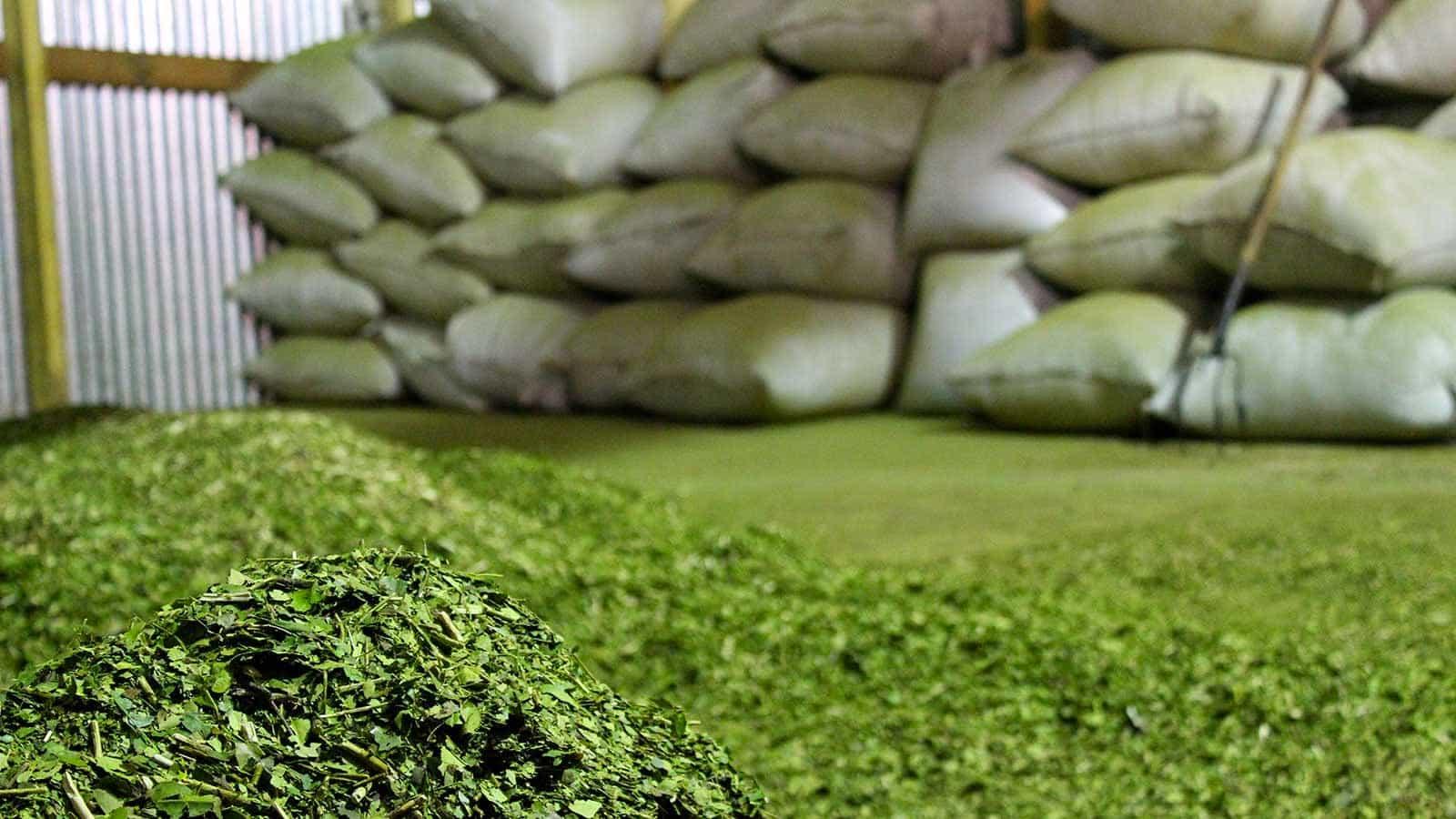Agricultura laudó a gusto de la Industria: 11,55 pesos el kilo de hoja verde