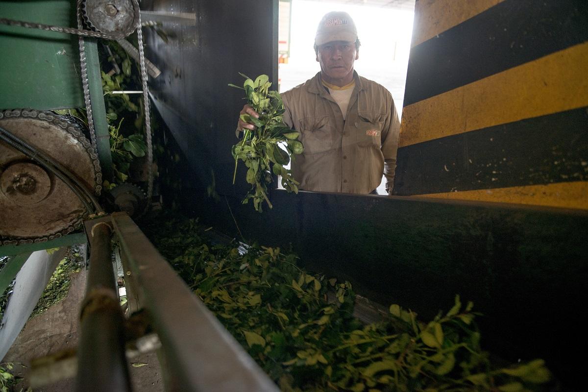 Yerbateros se plantan en 13,50 pesos como mínimo para el precio de la hoja verde