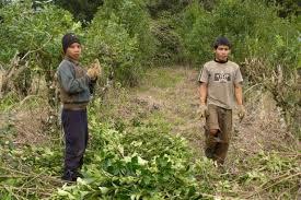 Misiones asistirá al encuentro sobre prevención del Trabajo Infantil
