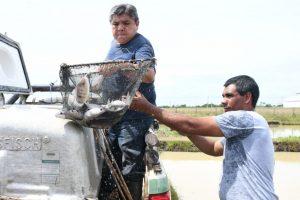 La EBY y Ecología entregan ejemplares juveniles de boga a un productor de Campo Bauer