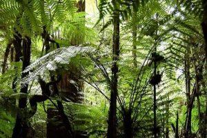 """Invitan a votar para que la """"Selva Misionera"""" sea una maravilla natural argentina"""