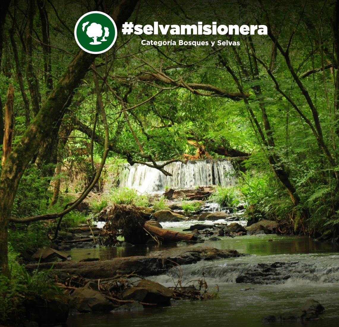 Llaman a votar por la Selva Misionera como una de las 7 Maravillas Naturales del País