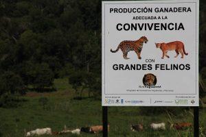 Misiones fue la primera provincia en certificar el primer campo ganadero argentino en convivencia con yaguaretés