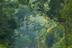 Misiones adhirió a la declaración de Nueva York sobre los bosques