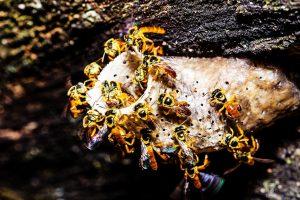 Misiones logra insertar a la miel de Yateí al código alimentario nacional