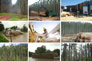 Boom de nuevos negocios: la producción y la exportación foresto industrial
