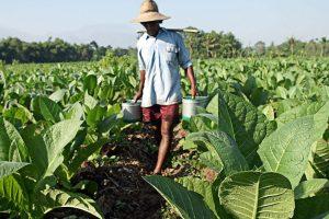 """""""La OCDE ignora la realidad del sector tabacalero de Misiones"""""""